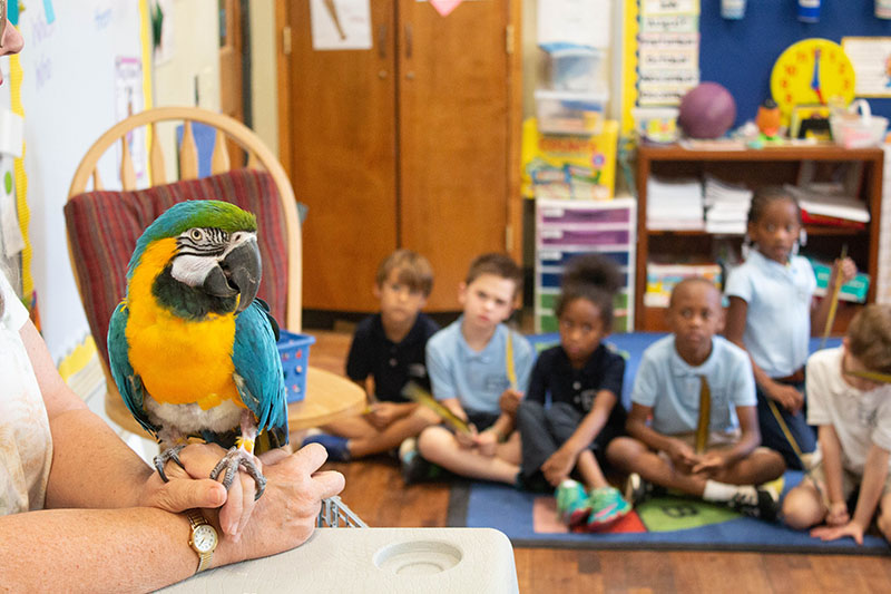 donate_macaw visit-9